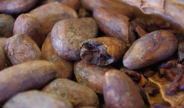 roastedcacaobeans